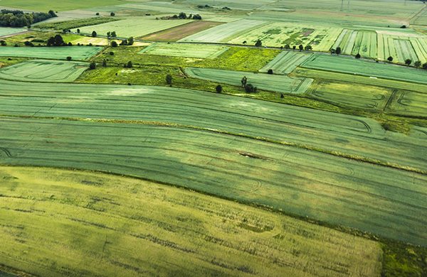 Variations in nutrient levels can be seen in fields