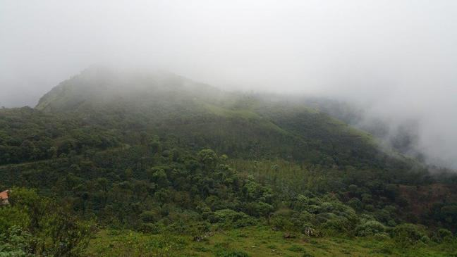 Photograph of green, forested hills covered in low cloud