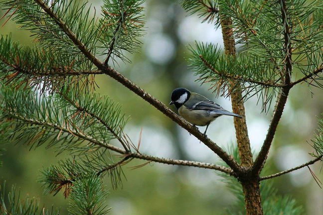 A bird perched on a tree branch