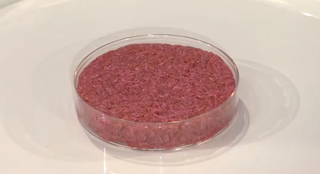 petri dish containing what looks like a normal burger, uncooked