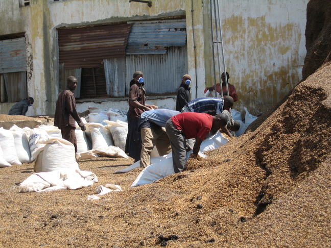 "Workers putting ""husk material"" -waste from coffee production- into bags2010 July Tanzania 032.jpg"
