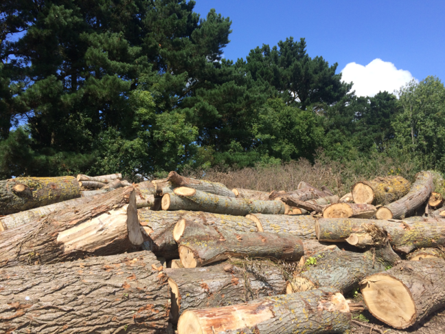 Deforestation - logs in the foreground from recently deforested trees while remaining woodland is in the background