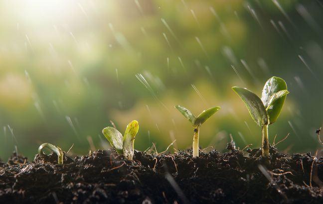 4 seedlings in the rain