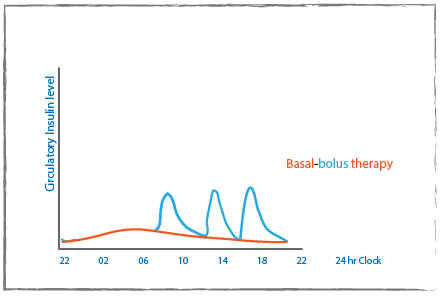 Basal-bolus therapy graph with circulatory insulin level on the y-axis and 24 hours on the x-axis. A red line shows the background level of insulin with a blue showing the peaks throughout the day.