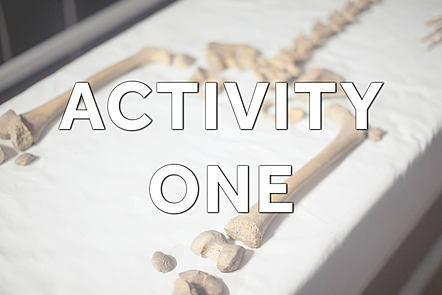 Text: Activity One