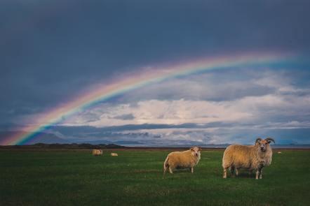 Sheep in a field under a rainbow