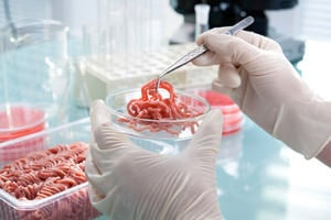 Meat being analysed in a laboratory for signs of food fraud