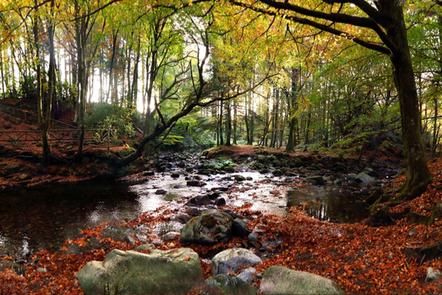 Autumn arrives at an Irish river