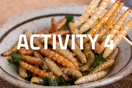 Plate of insects with 'Activity 4' written over the top of the image