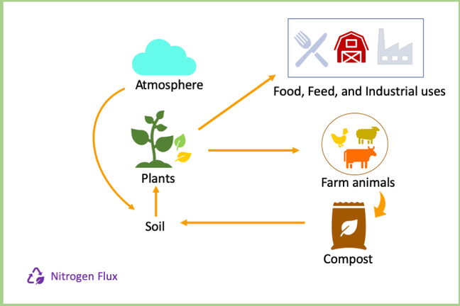 nitrogen flux