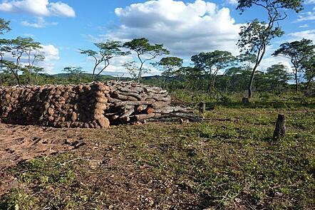 A photograph of timber being prepared to be made into charcoal in Tanzania