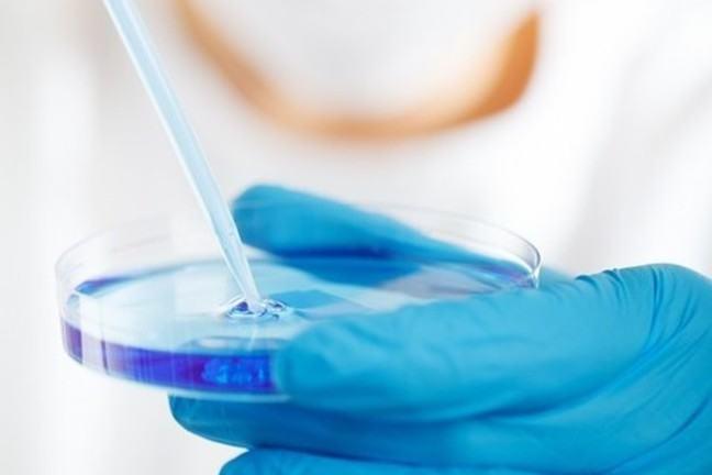 Growing bacteria in a Petri dish.