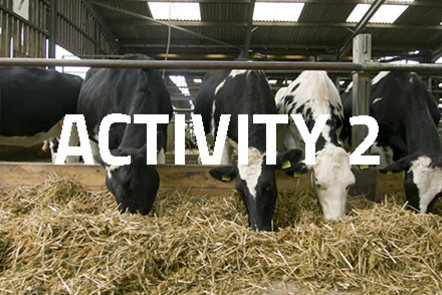 Four cows in a row eating straw. 'Activity 2' written over the top.