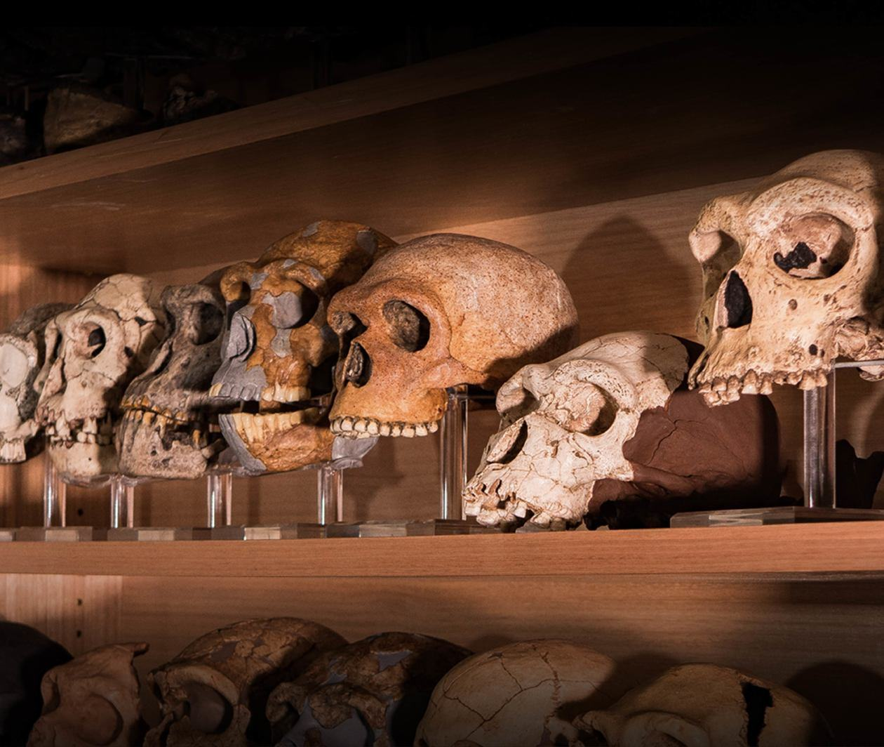A Question of Time: How We Date Human Evolution