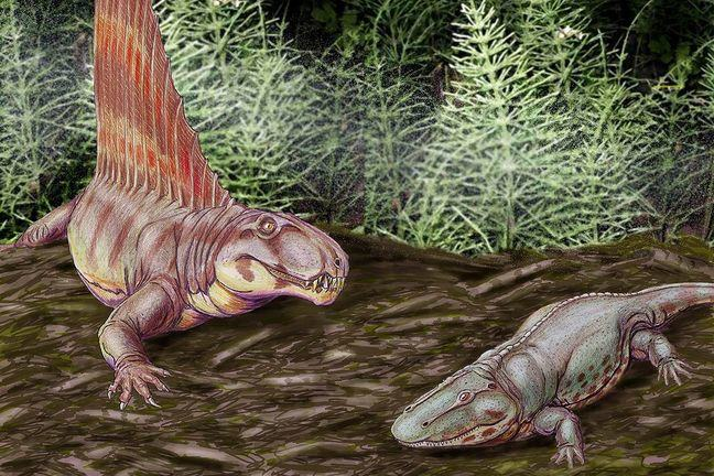 Animals from the Early Permian-  the pelycosaur,_Dimetrodon gigas & the tetrapod, Eryops megacephalus_