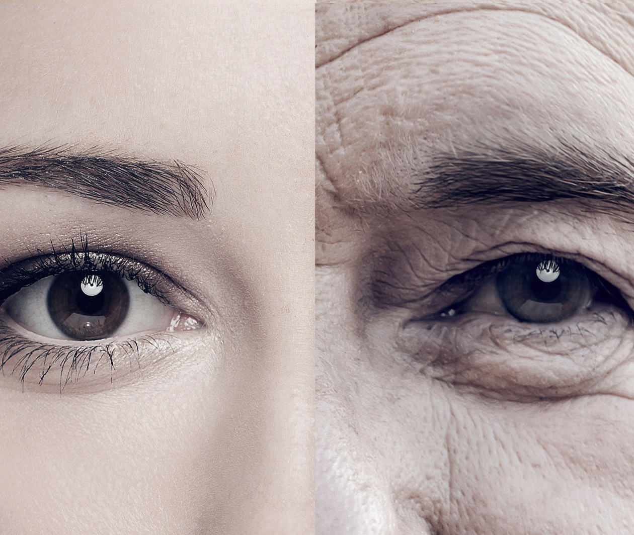Why Do We Age? The Molecular Mechanisms of Ageing