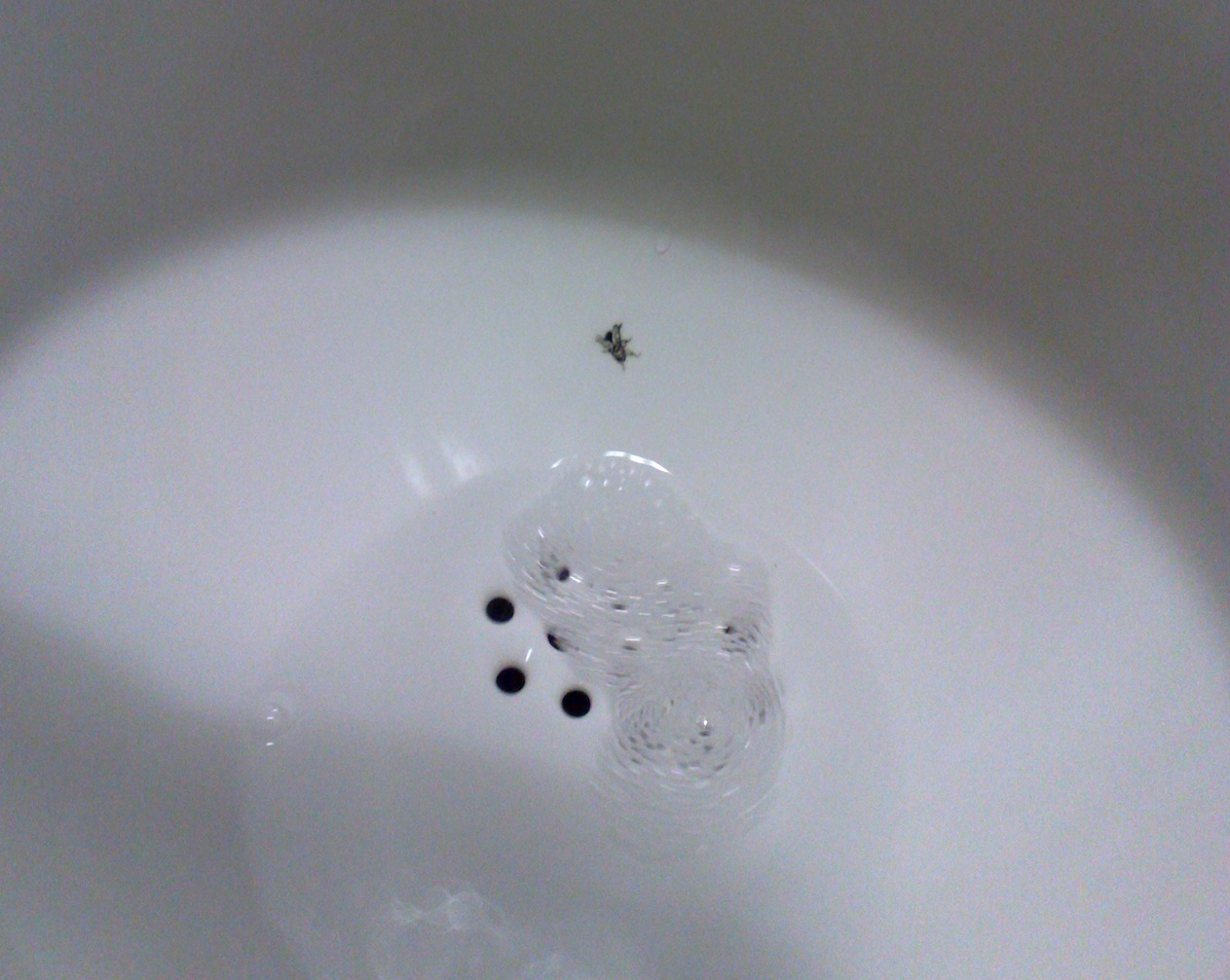 Painted fly on urinal: a 'nudge' that reduces unwanted splashes