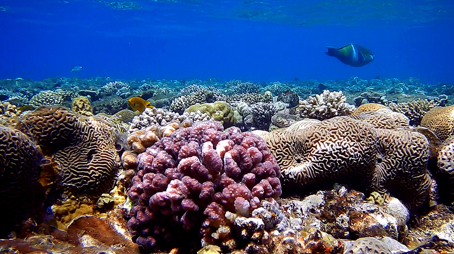 An underwater view of a coral reef and fish