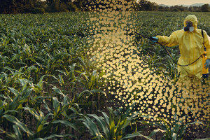 a man spraying crops