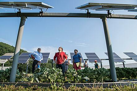 Photo of people standing under an agrivoltaics site (crops being grown under solar panels)