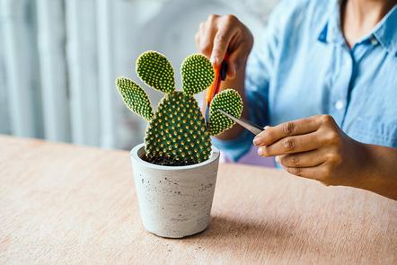 Gardener preparing to repot a cactus