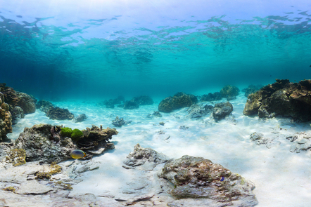 Underwater view of sea bed with sand and corals