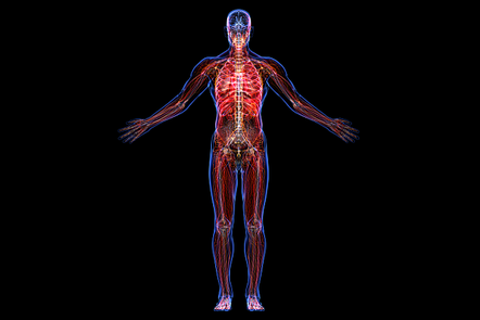 an image of the nervous system in our bodies