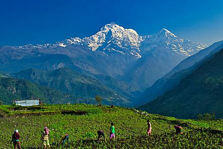 Villagers working in the valleys around the Annapurna can enjoy these stunning views. Farmers here can also profit by the touristic business.
