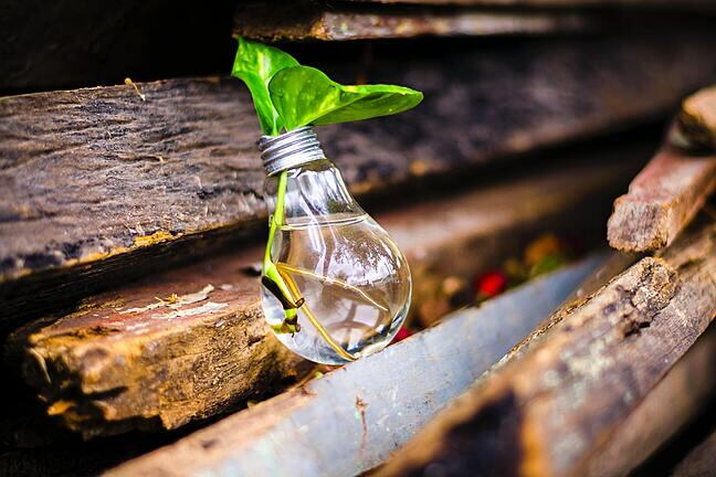 A lightbulb repurposed as a plant pot lies on wood with thriving plant propagating roots in it