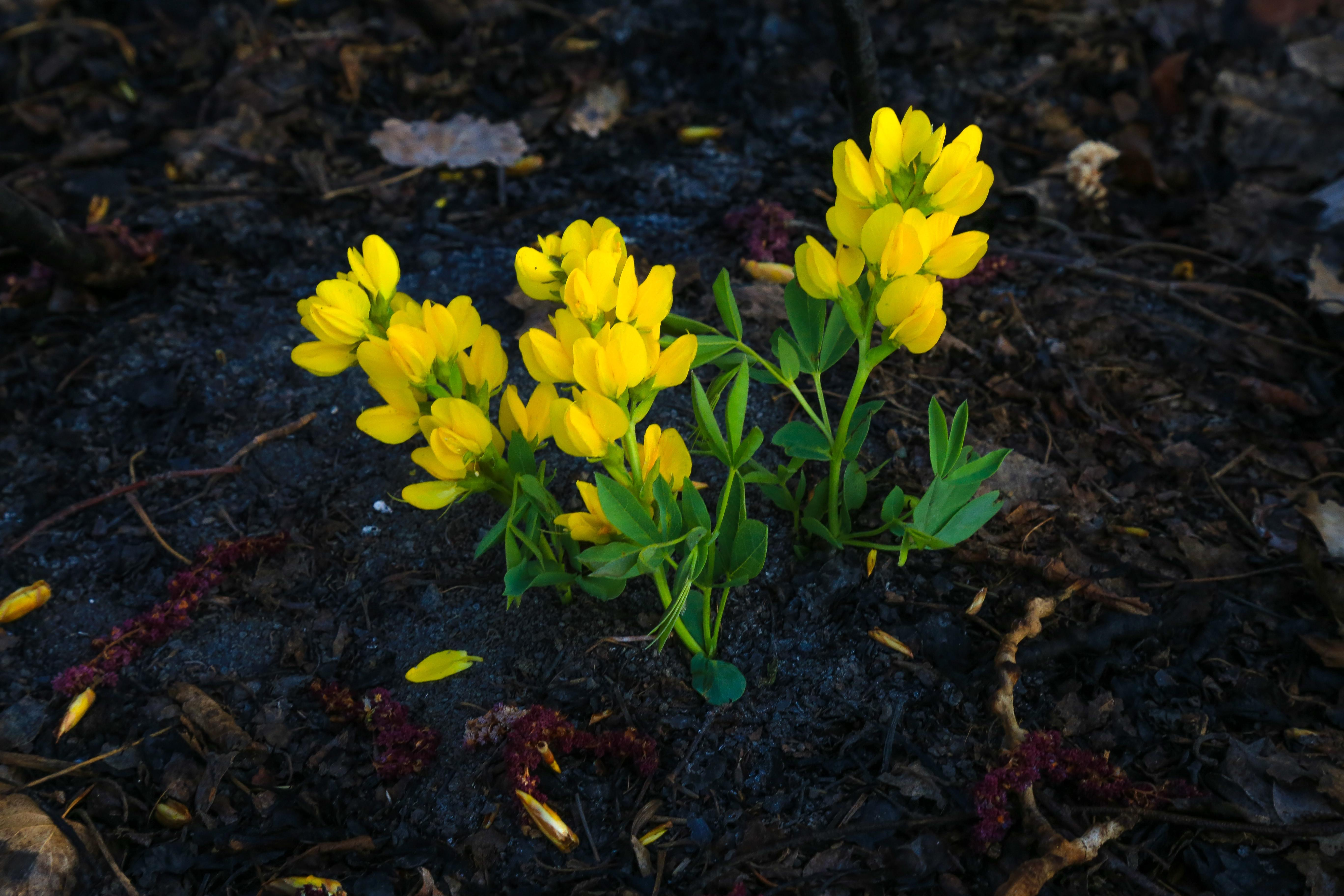 Yellow flowers growing in the soil