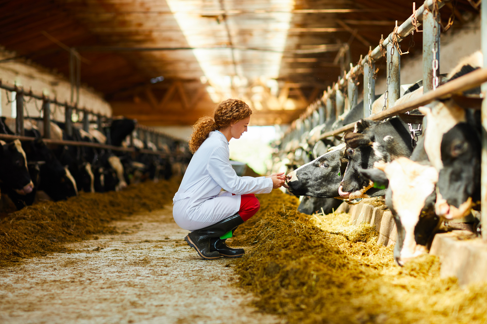 The Food Supply Chain - Online Veterinary Course - FutureLearn