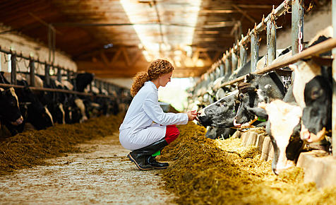 Veterinary Practitioners and the Food Supply Chain