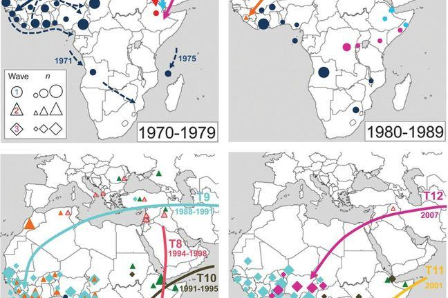 Maps showing propagation of the pandemic into Africa in four time periods, with different strains represented by different colours. Please see Weill et al for more detail.