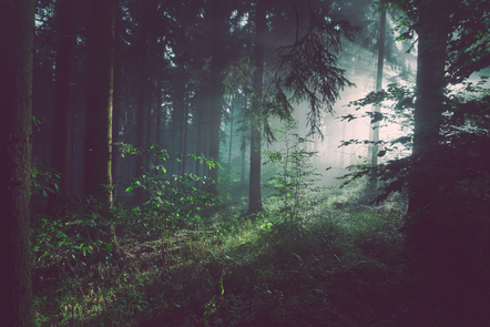 Forest with sunlight shining through