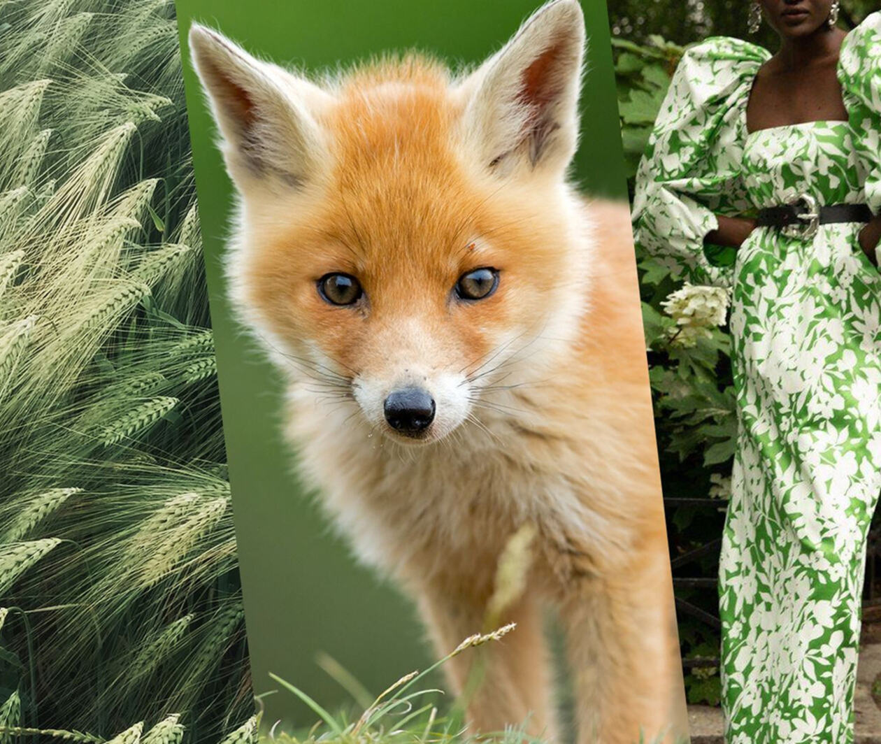 Compassion in Fashion: Sustainability and the Global Fur Trade 同理新时尚:可持续发展与全球皮草贸易