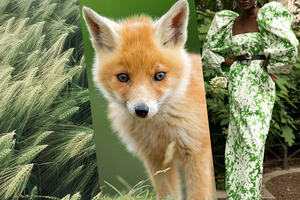 Three images of corn, a fox cub and a green dress