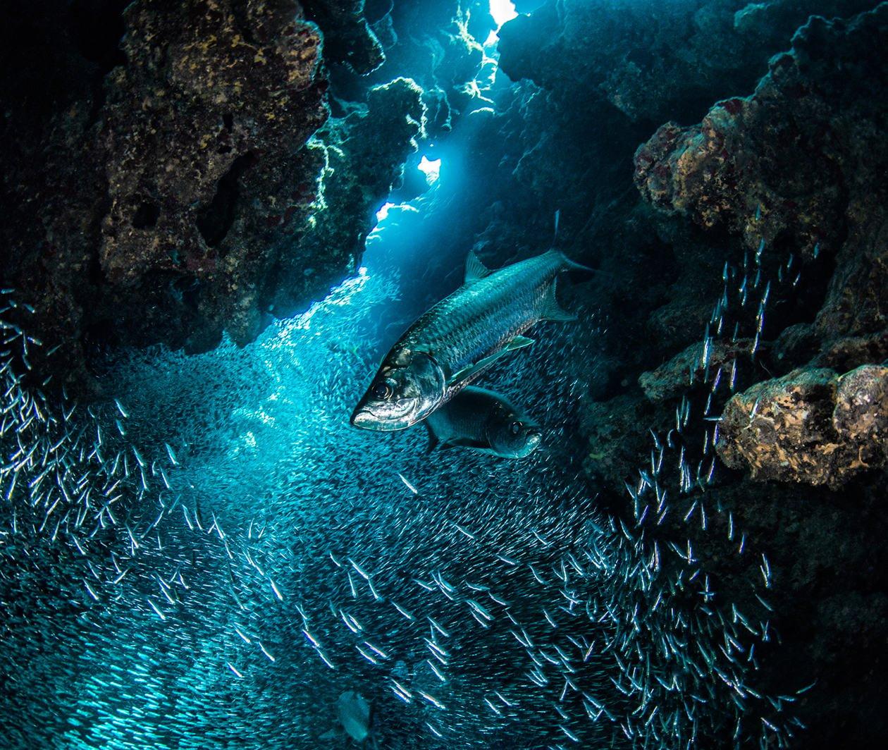 Exploring Our Ocean