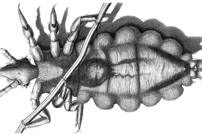 Robert Hooke, Micrographia, fig. 23