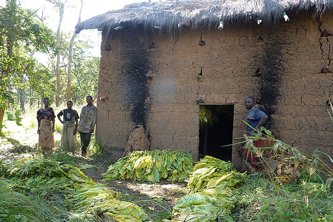 A family preparing tobacco leaves to be dried in a tobacco burner in Tanzania