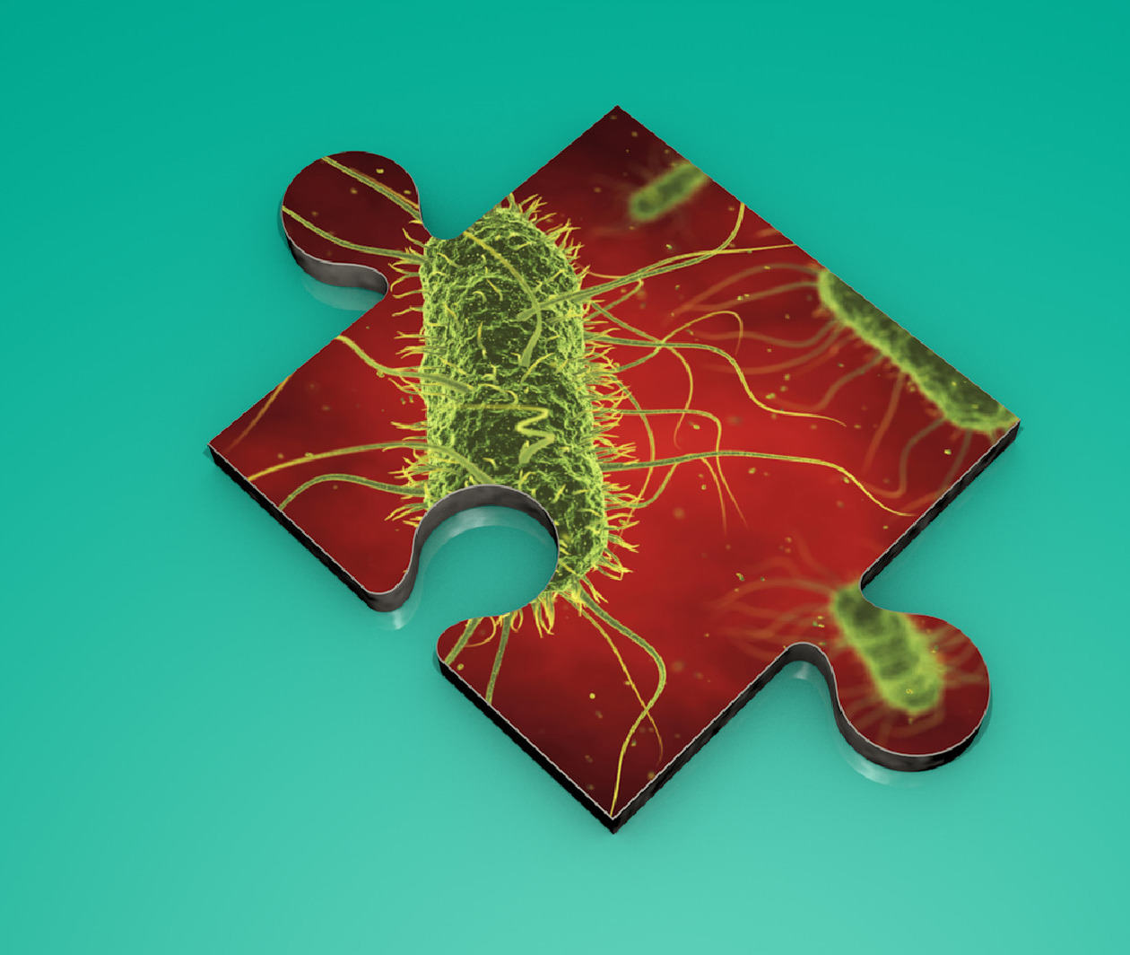 Causes of Human Disease: Transmitting and Fighting Infection