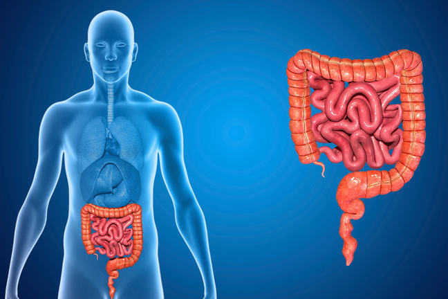 Illustration of the human digestive system.