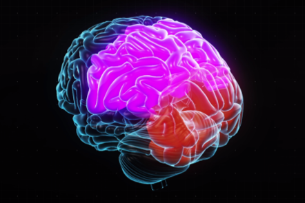 Brain image highlighting the occipital and parietal lobes