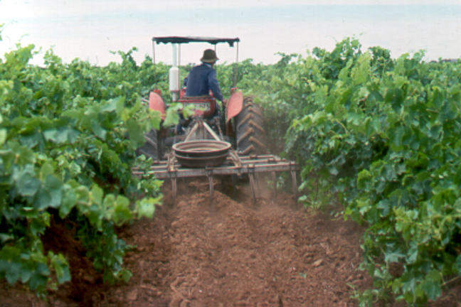 A photo showing a back of a small tractor driving through a vineyard