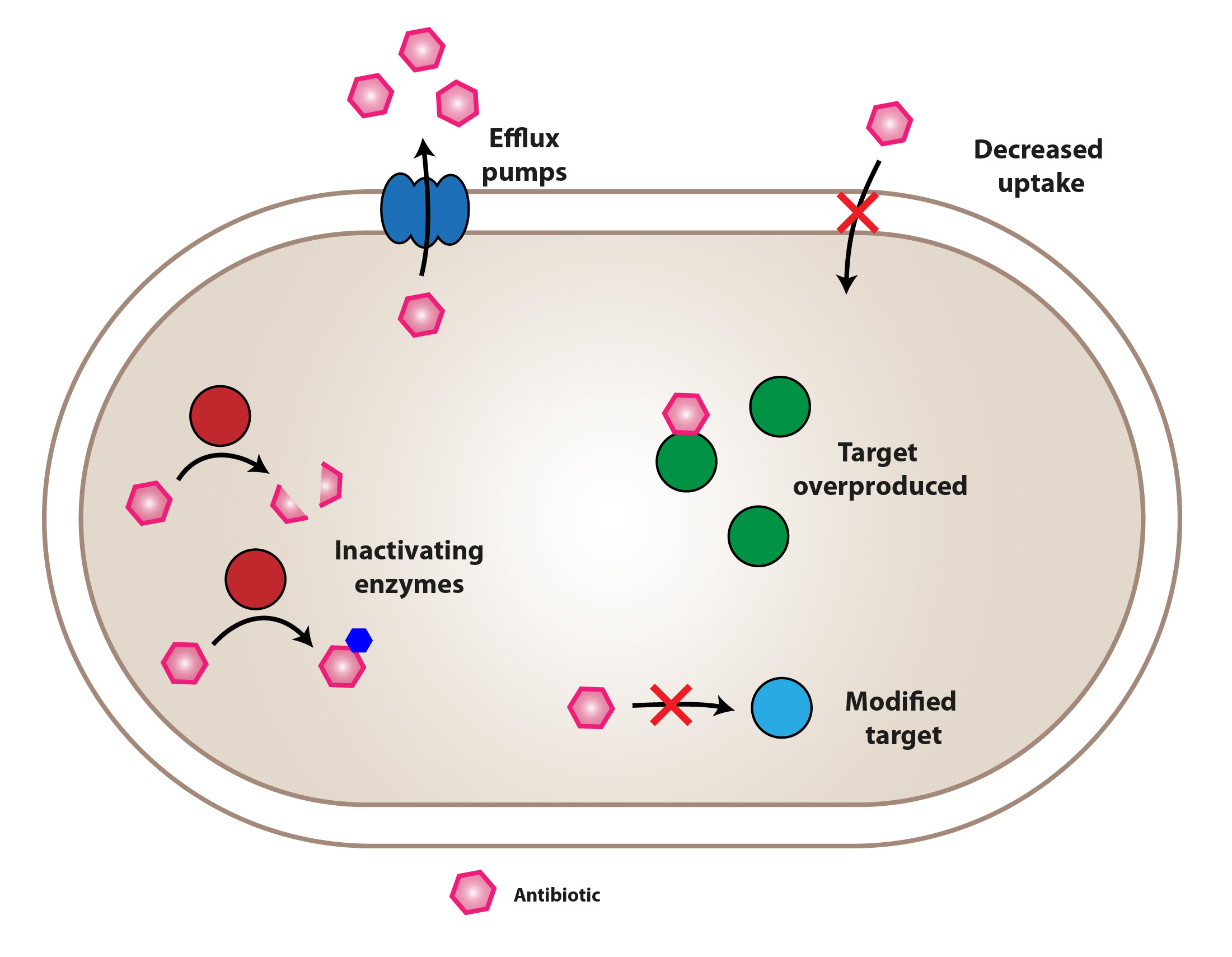 A picture of a bacterium with different antibiotic resistance mechanisms illustrated