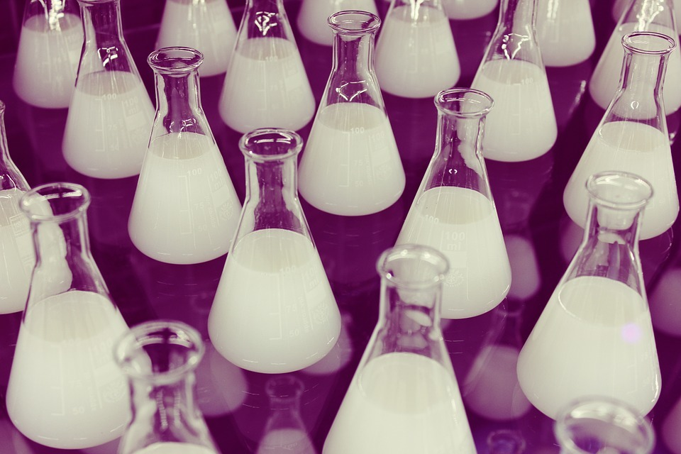 Growing bacterial cultures in conical flasks.