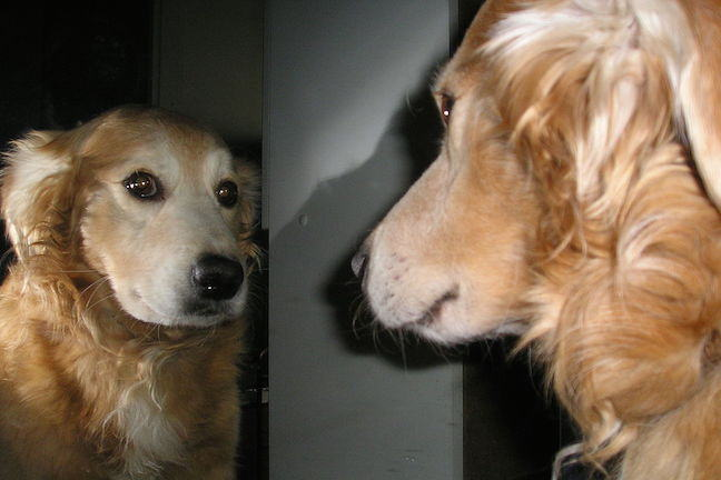 Dog looking at itself in a mirror