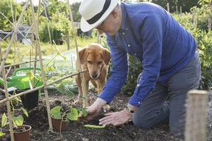 Man planting seeds with his dog watching