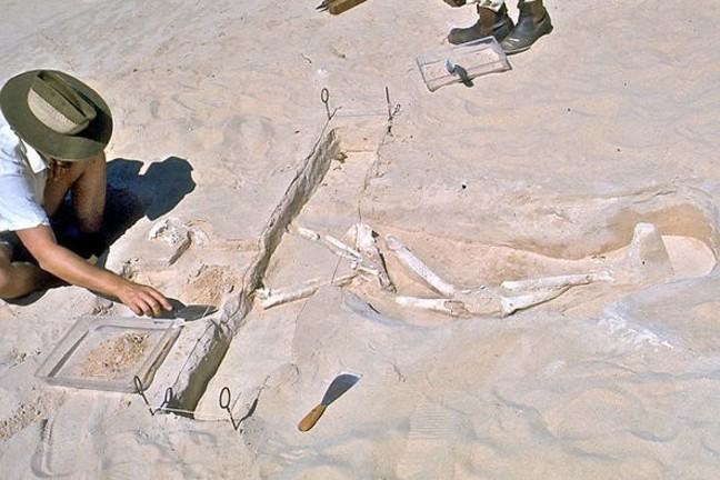 Dr Alan Thorne working on the site in 1974