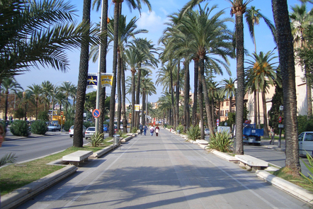 Main street with palm trees
