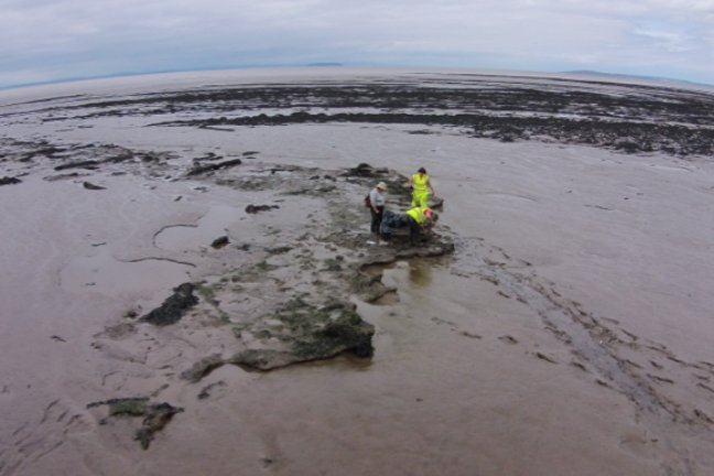 Three students excavating a submerged forest.